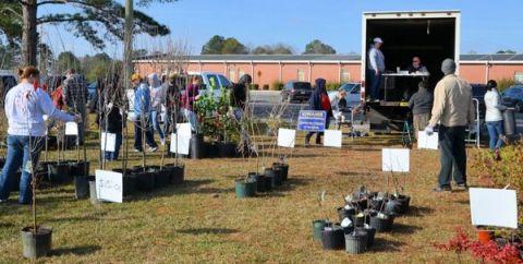 The Douglas Kiwanis Club announces annual tree sale Feb. 3