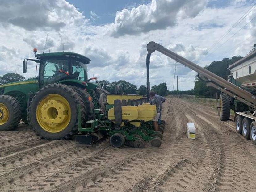 Cooling weather impact on peanut planting and row crop disease update