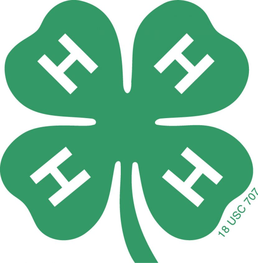 It's time to start thinking about 4-H summer camp