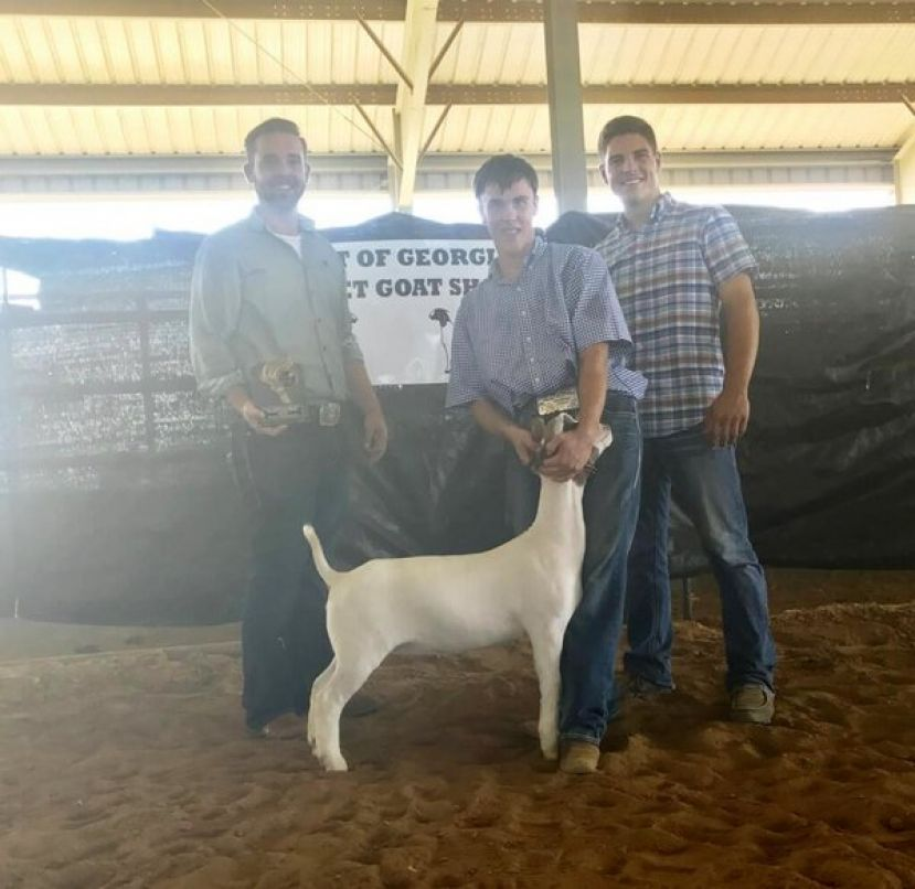 Cole Carver of the Coffee County Livestock Show Team exhibited the Reserve Grand Champion Doe Goat at the Heart of Georgia Goat Show in Dublin, GA on Saturday, August 5, 2017. Congratulations Cole on a job very well done!