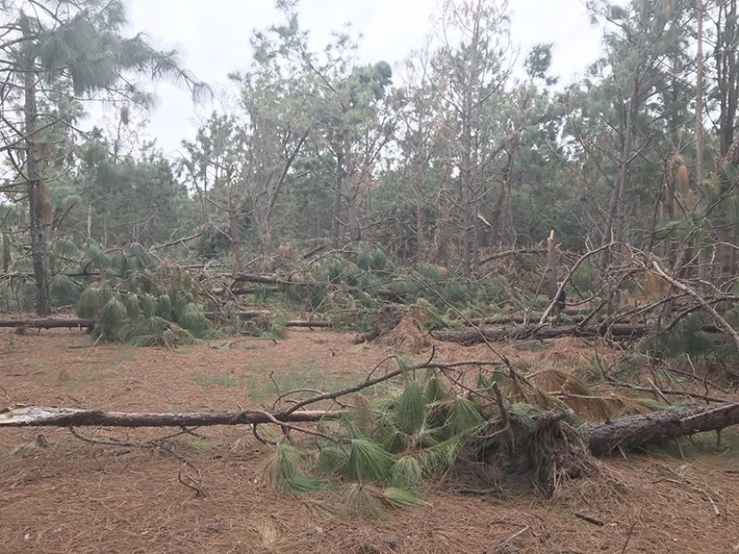 Hurricane Michael damaged timber stands as well, here are tips for salvaging what was hurt