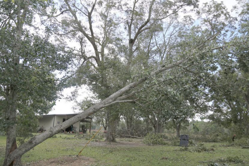 Pecan trees in Tifton damaged by Hurricane Michael